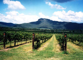 wine country tours wollombi