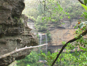 Blue Mountains Australia tour - Rainforest & waterfalls