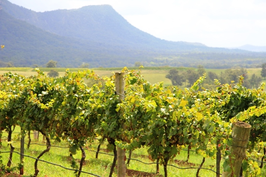2 day Hunter Valley vineyards tour