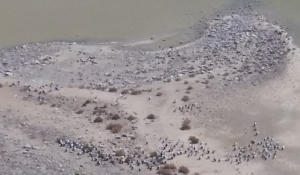 Lake Eyre Tours Flights June July August September 2019 pelicans nesting